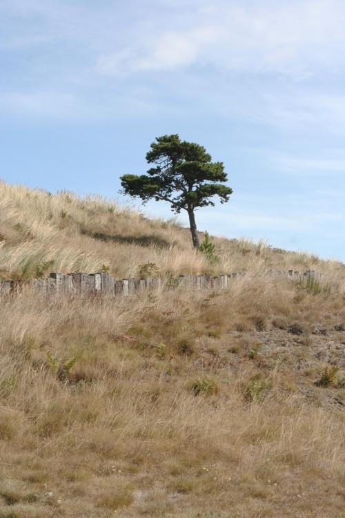 Bandon Tree